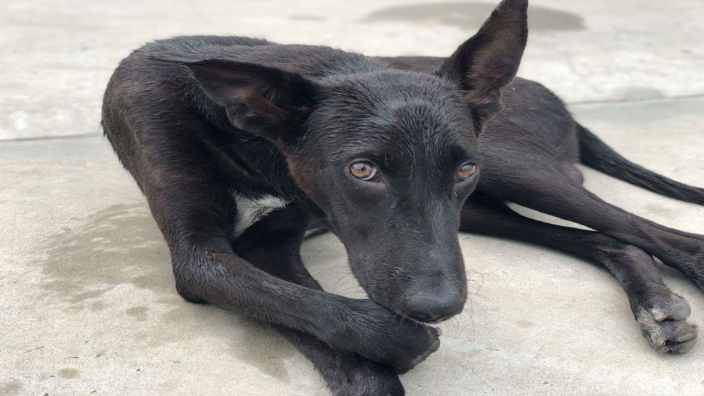 Human — Stray Dog Conflict in India: How You Can Help?