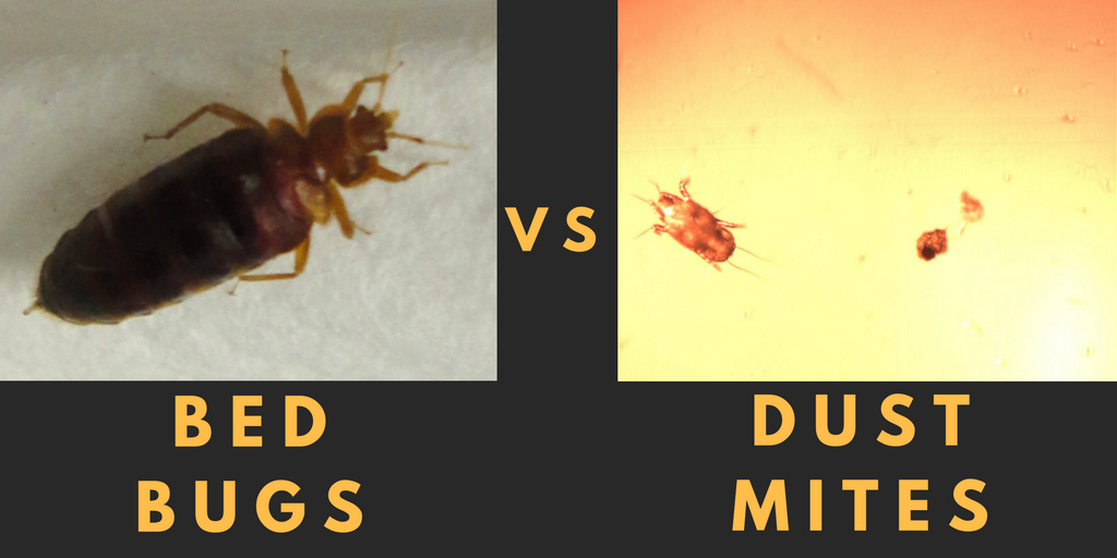 The Difference Between Bed Bugs Dust Mites By Airmid Healthgroup Medium