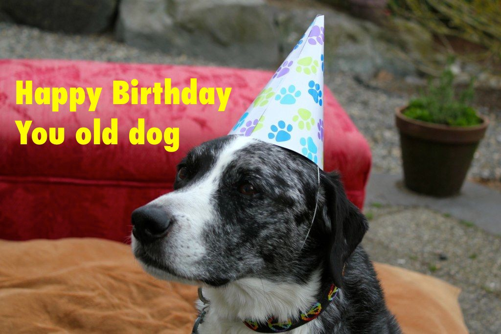 Dog Birthday Meme Golfclub