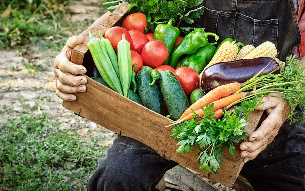 The Ultimate Guide to the Best Farm Boxes In London | by Honest Food |  Medium