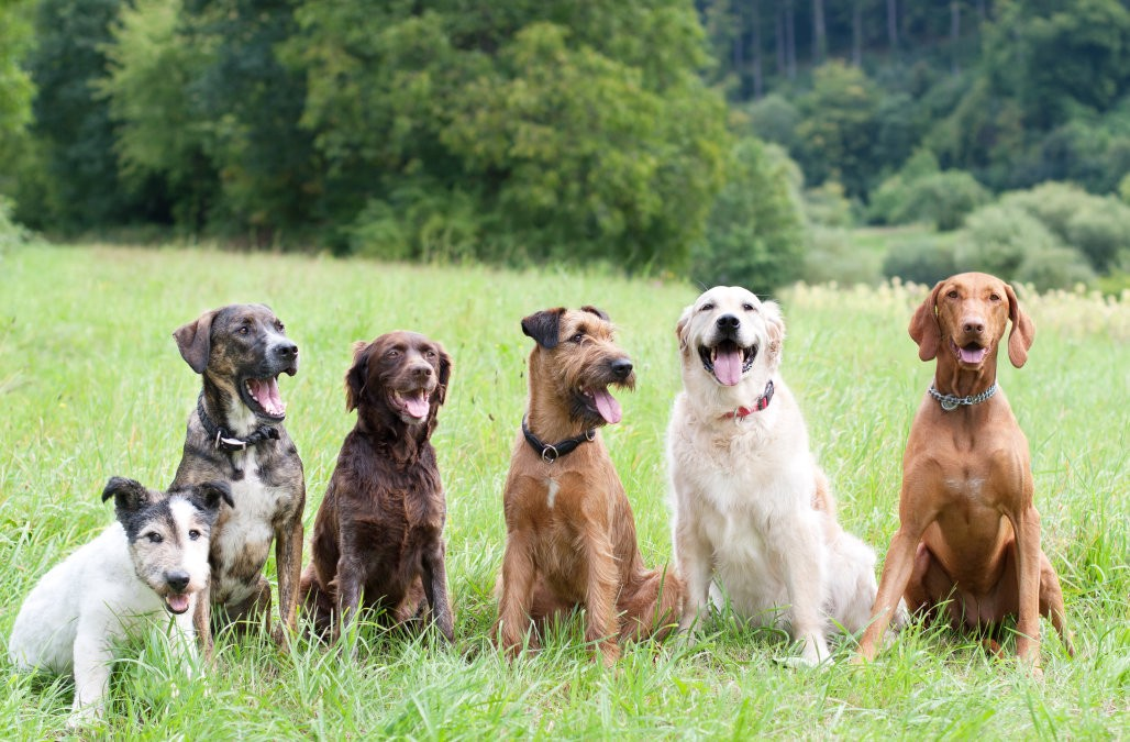 Calming The Chaos: Learn How To Have A Well-Trained Dog