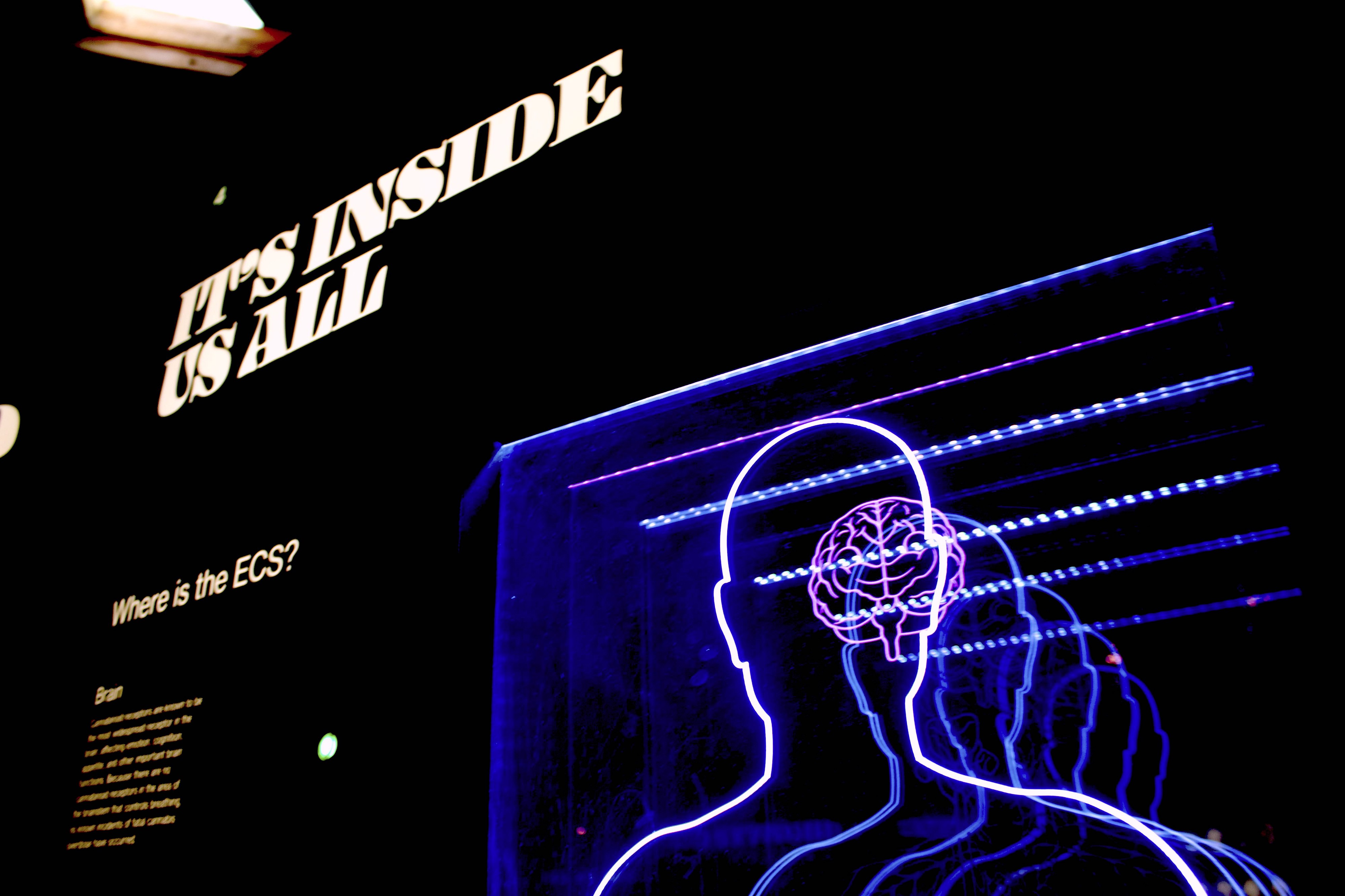 """A sign reading """"IT'S INSIDE US ALL,"""" above a neon model of a brain. I am not convinced this sign is correct."""