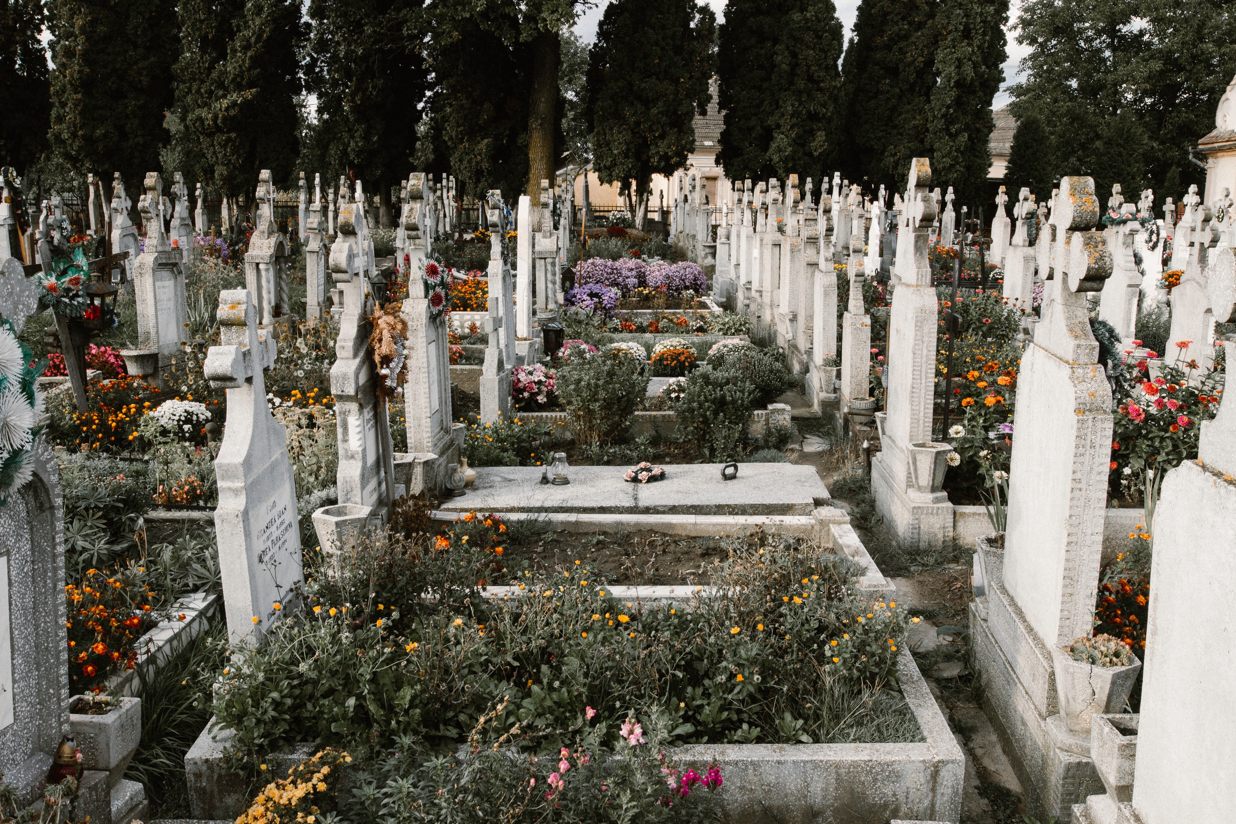 Cemetery with rows of headstones