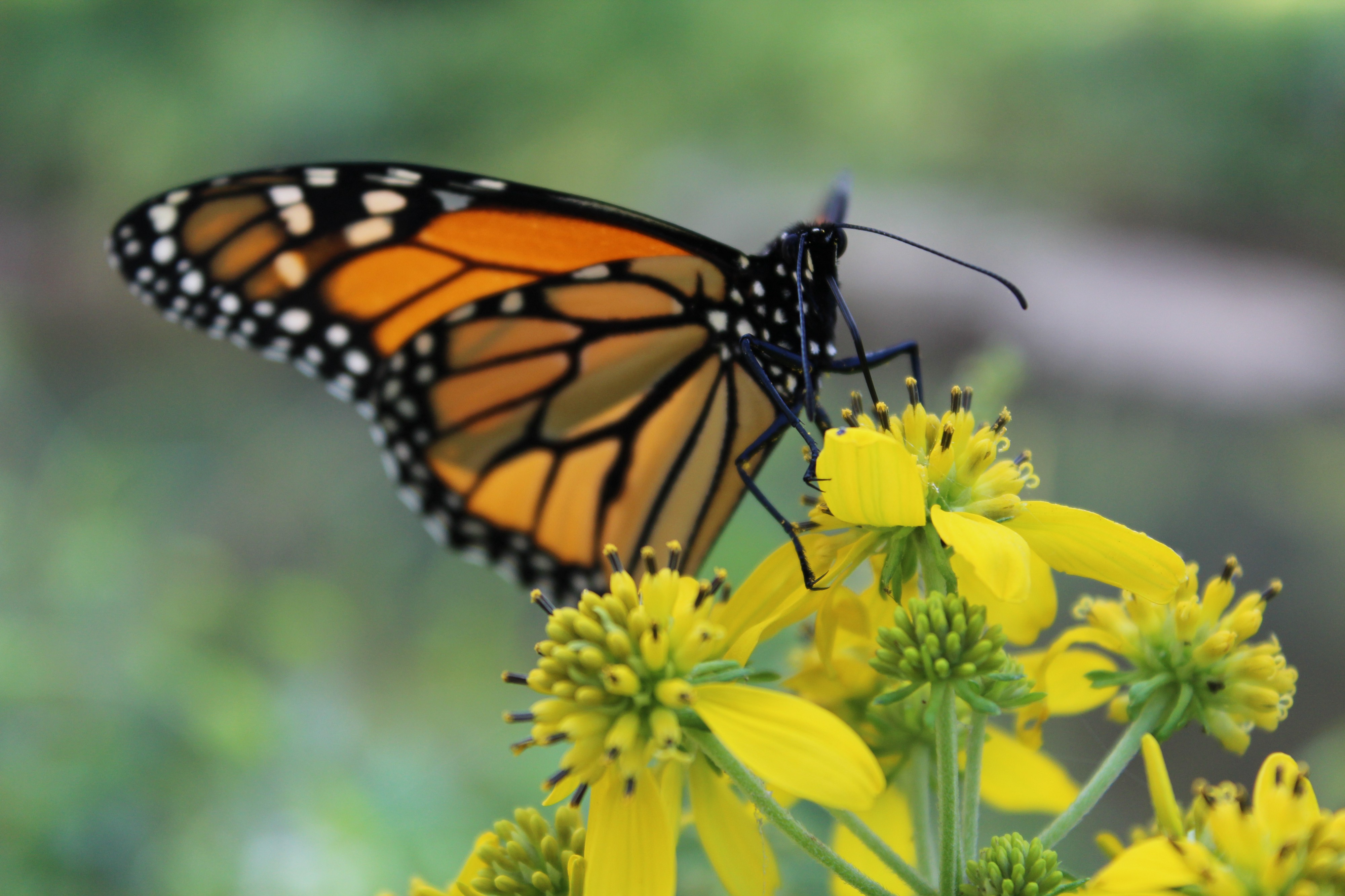 How To Catch a Butterfly. Butterflies are elusive creatures. They…   by  Alecia Kennedy   Dabbler