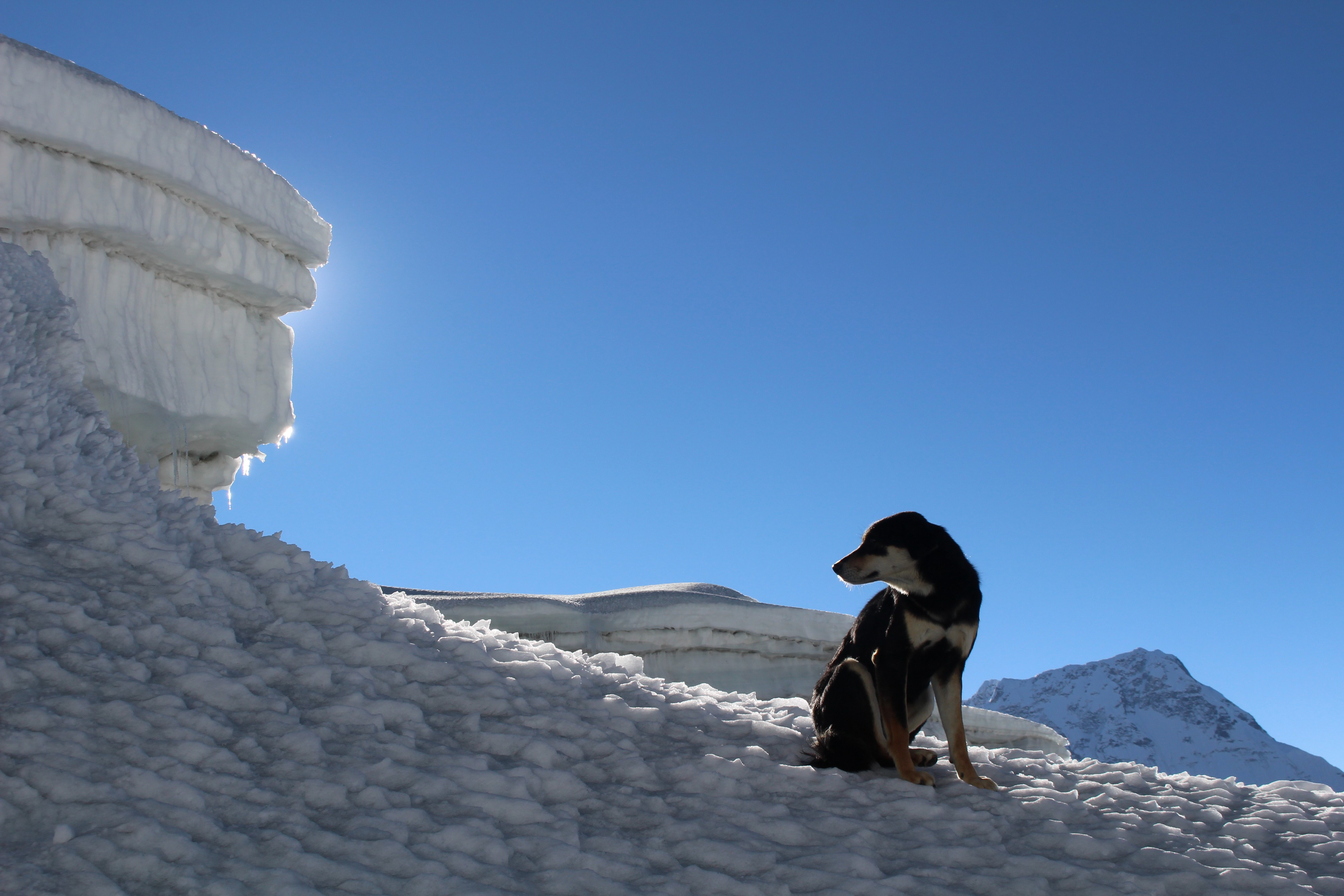 Stray Dog Climbs 23,000' Mountain - Noteworthy - The Journal