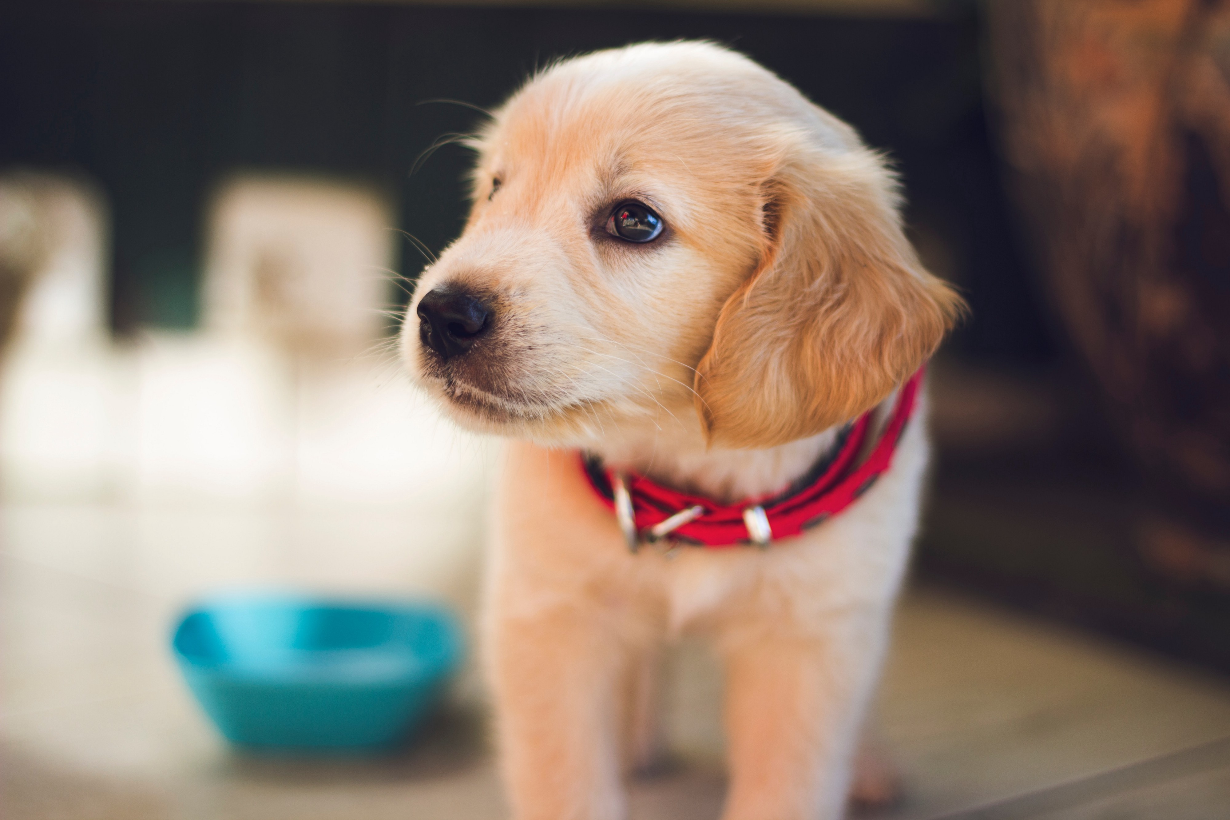 Tips And Advice On Caring For Your Dog