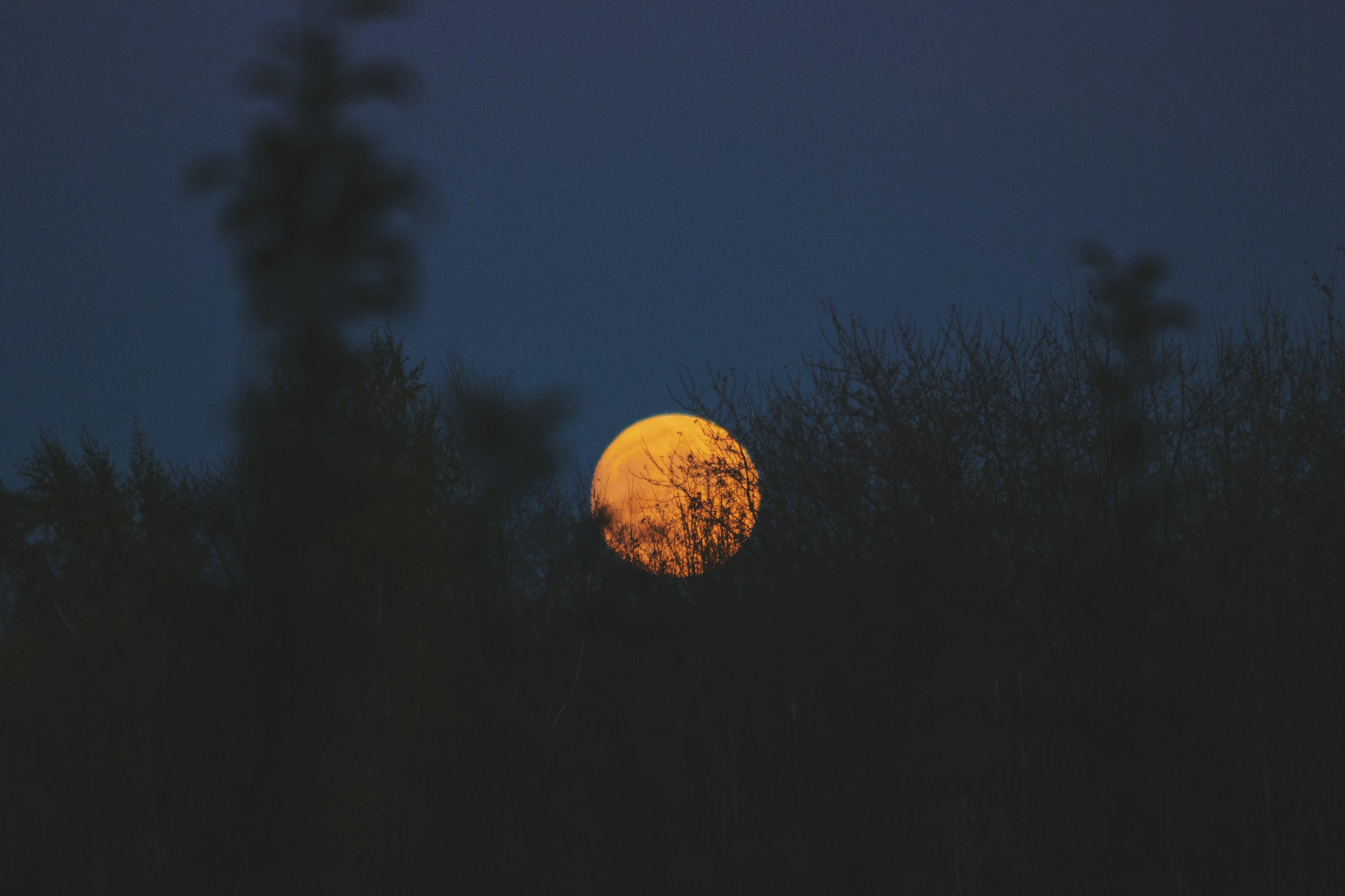 Moon rising over a forest