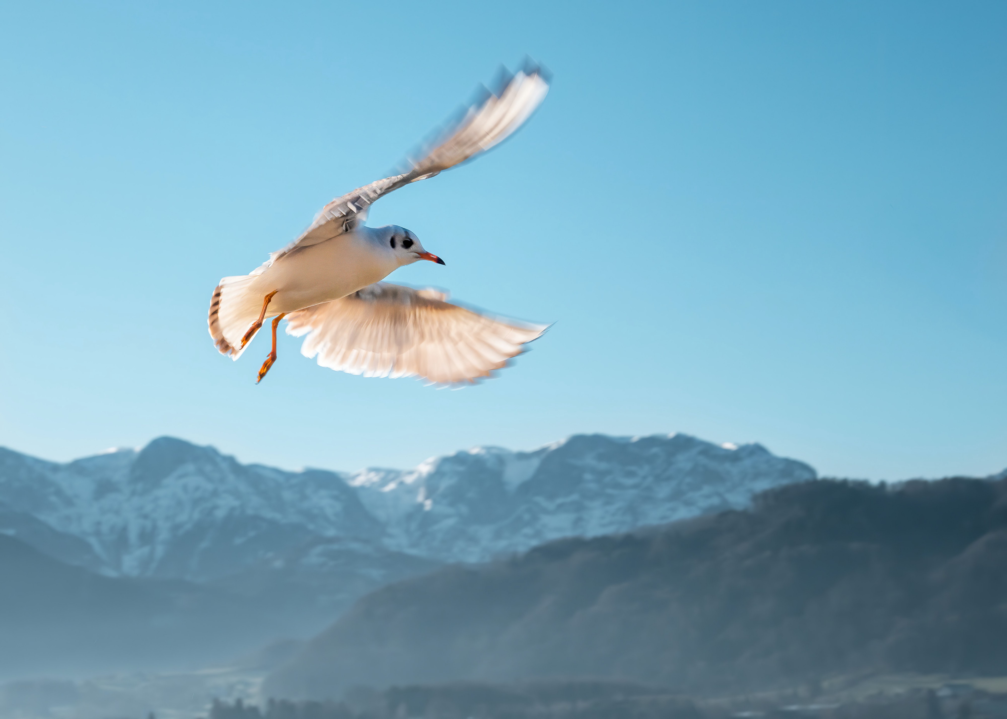 White and brown bird on air