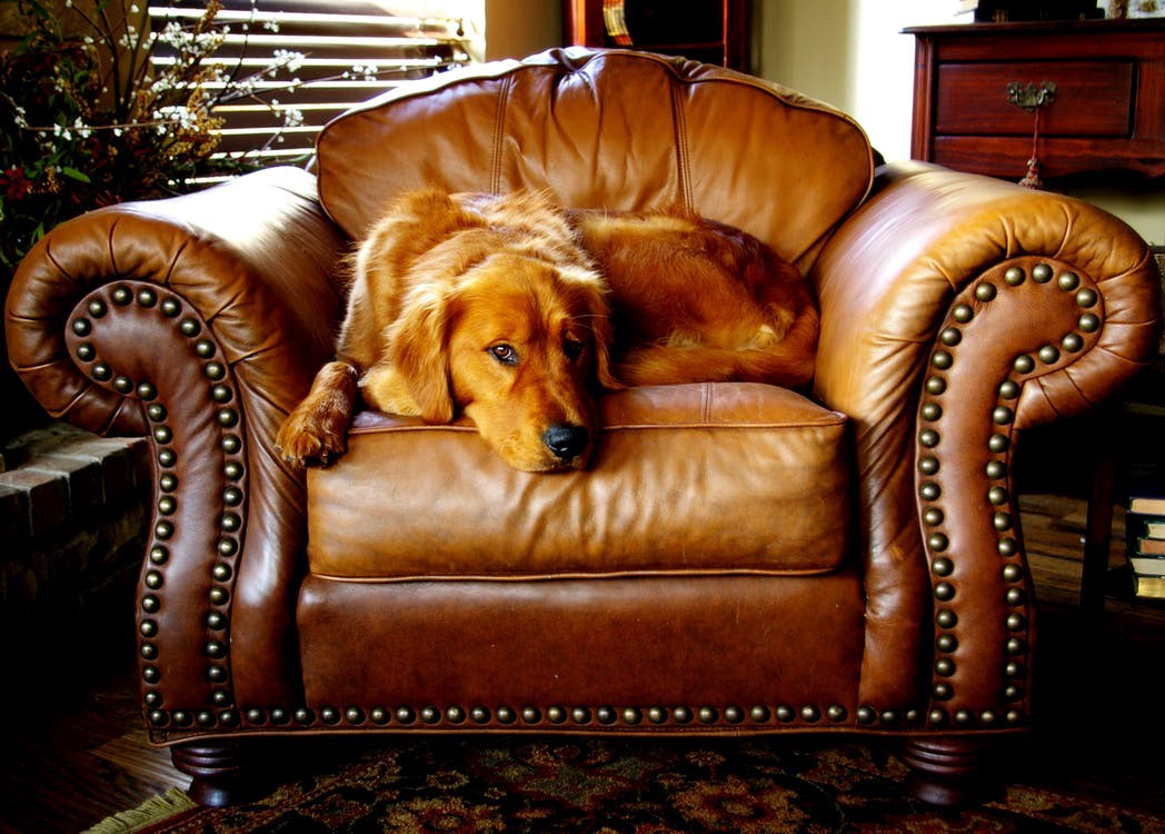 Furniture Upholstery Guide