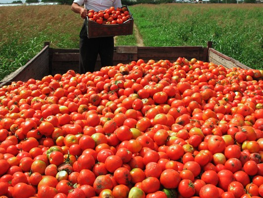By studying the sample of tomatoes can we able to predict entire tomato harvest. In situations like this, scientists can use inferential statistics to help them make sense of their data.