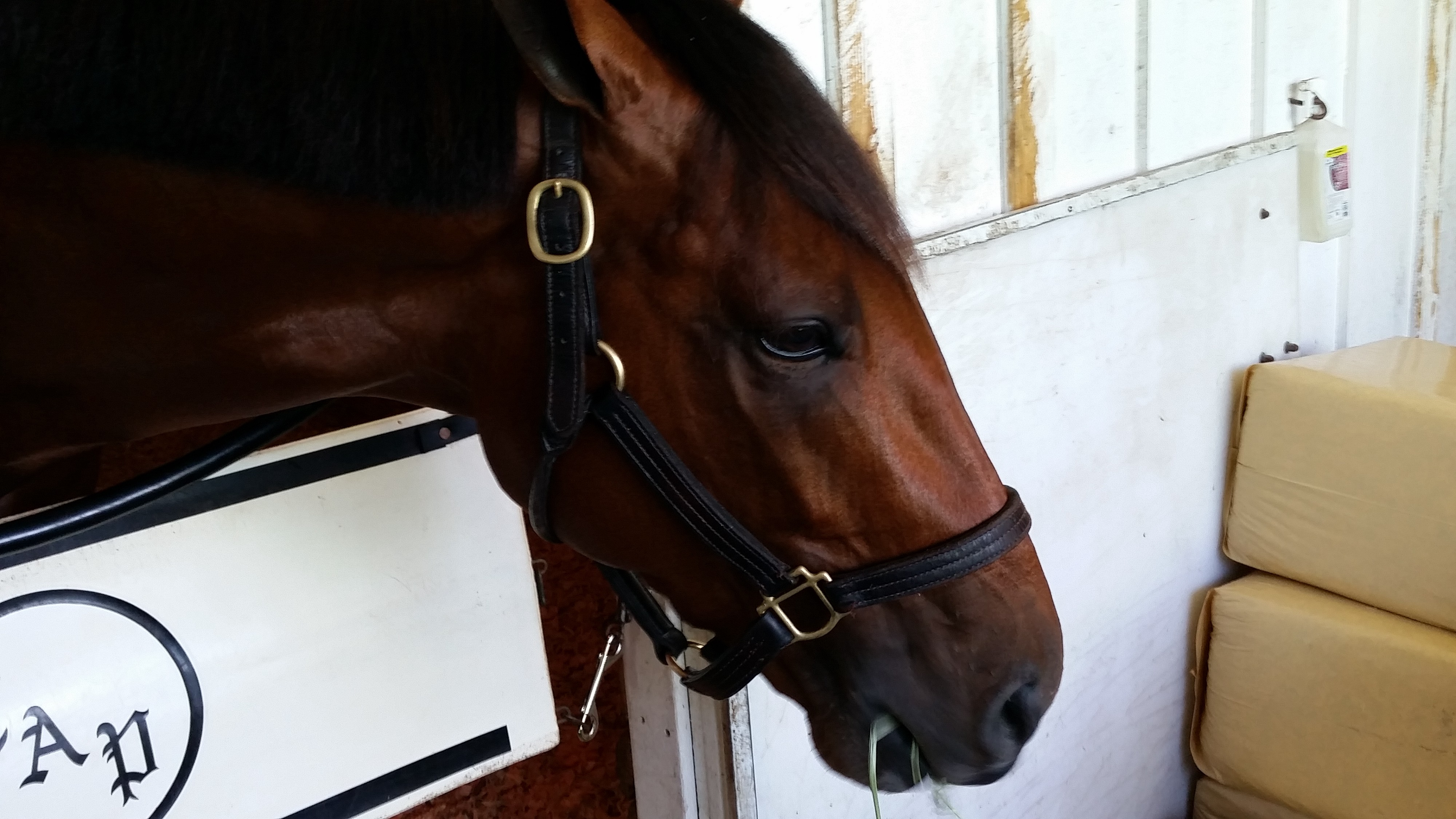 Kentucky Derby Horse Profile: Patch - TwinSpires com