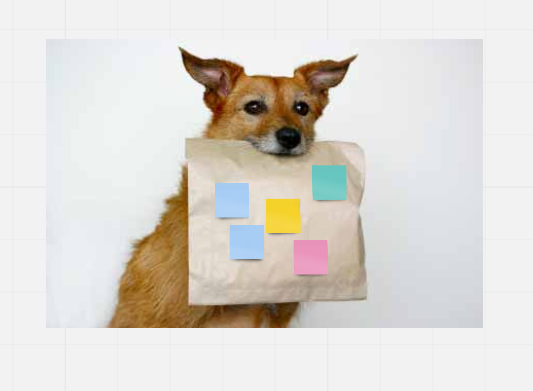 Dog holding a take away bag with post-its on it