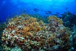 Reefs and Research