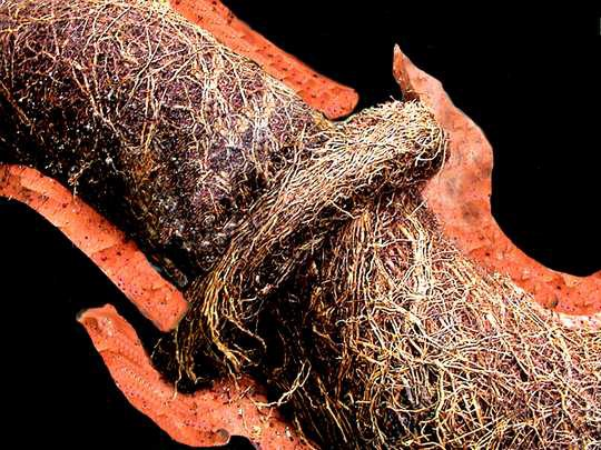 Tree Roots : Drain's Worst Enemy - Space Drain Cleaning - Medium