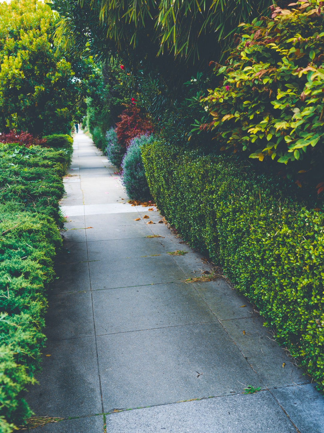 Types Of Landscaping That You Can Use In Your Backyard
