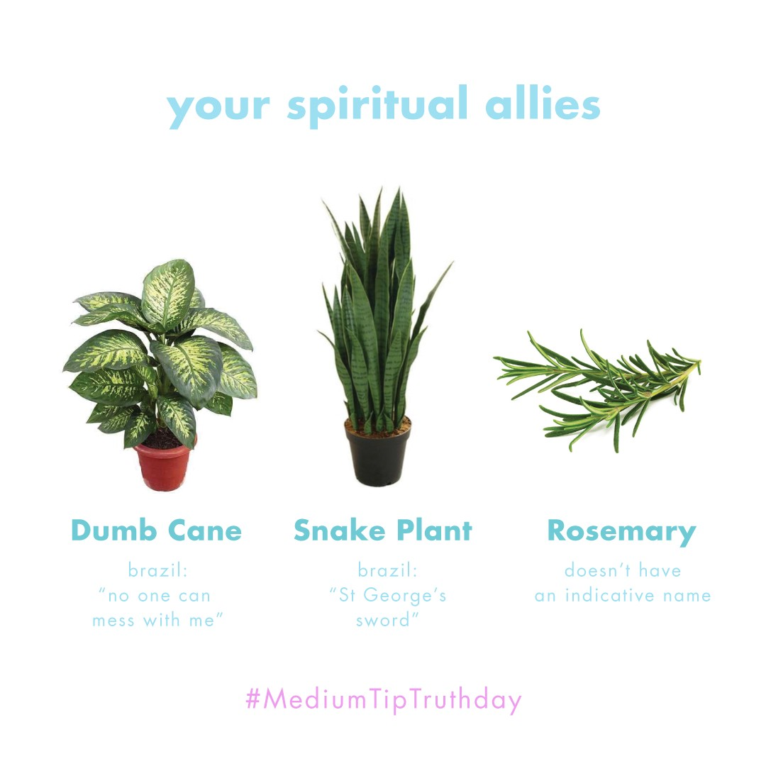 Spiritual plants for your protection - The Cosmos And Soul ... on tall houseplants, tropical houseplants, indoor houseplants, cactus houseplants,
