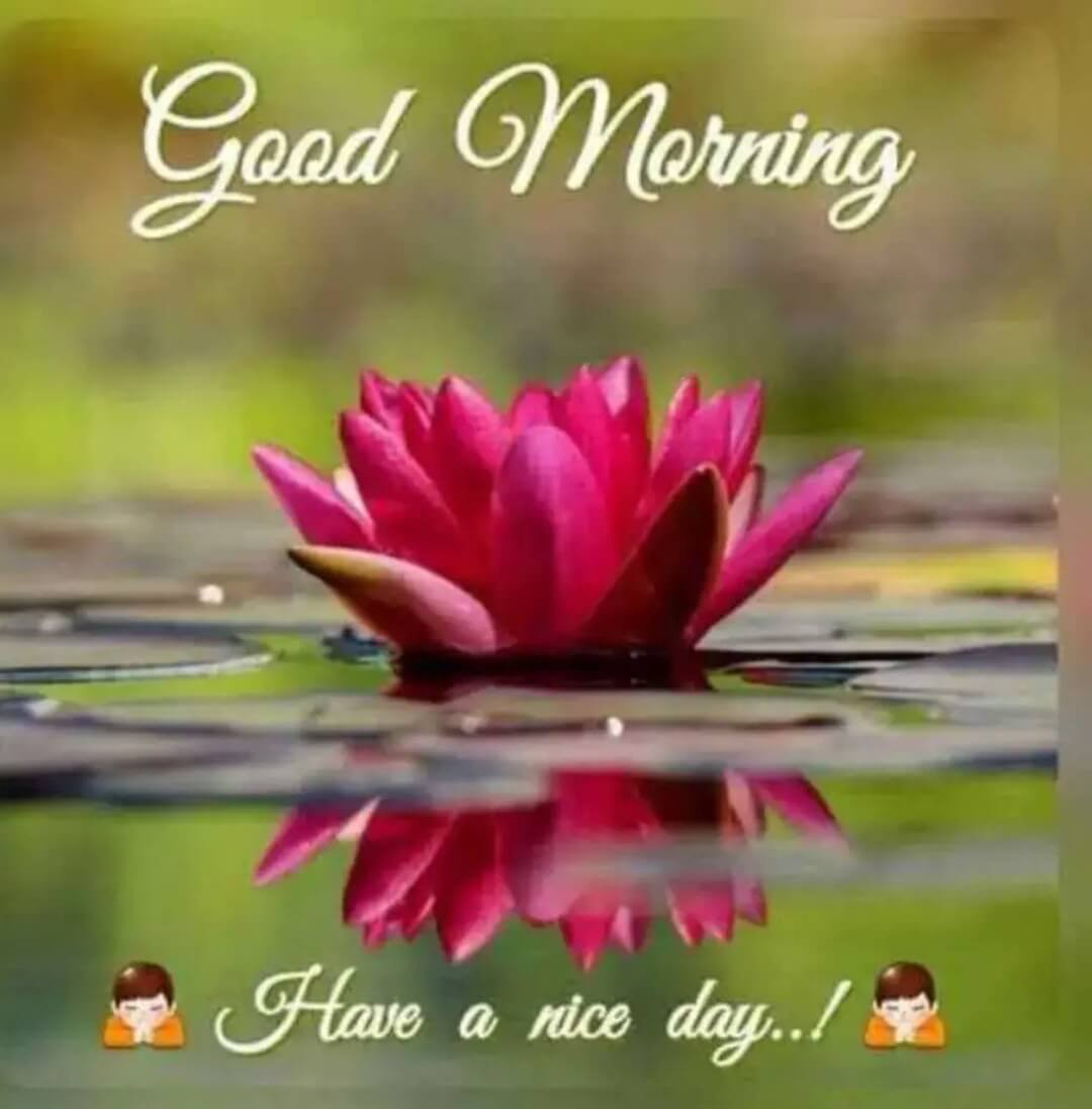 60 Beautiful Good Morning Flowers Images By Images Techdiaries Xyz Medium