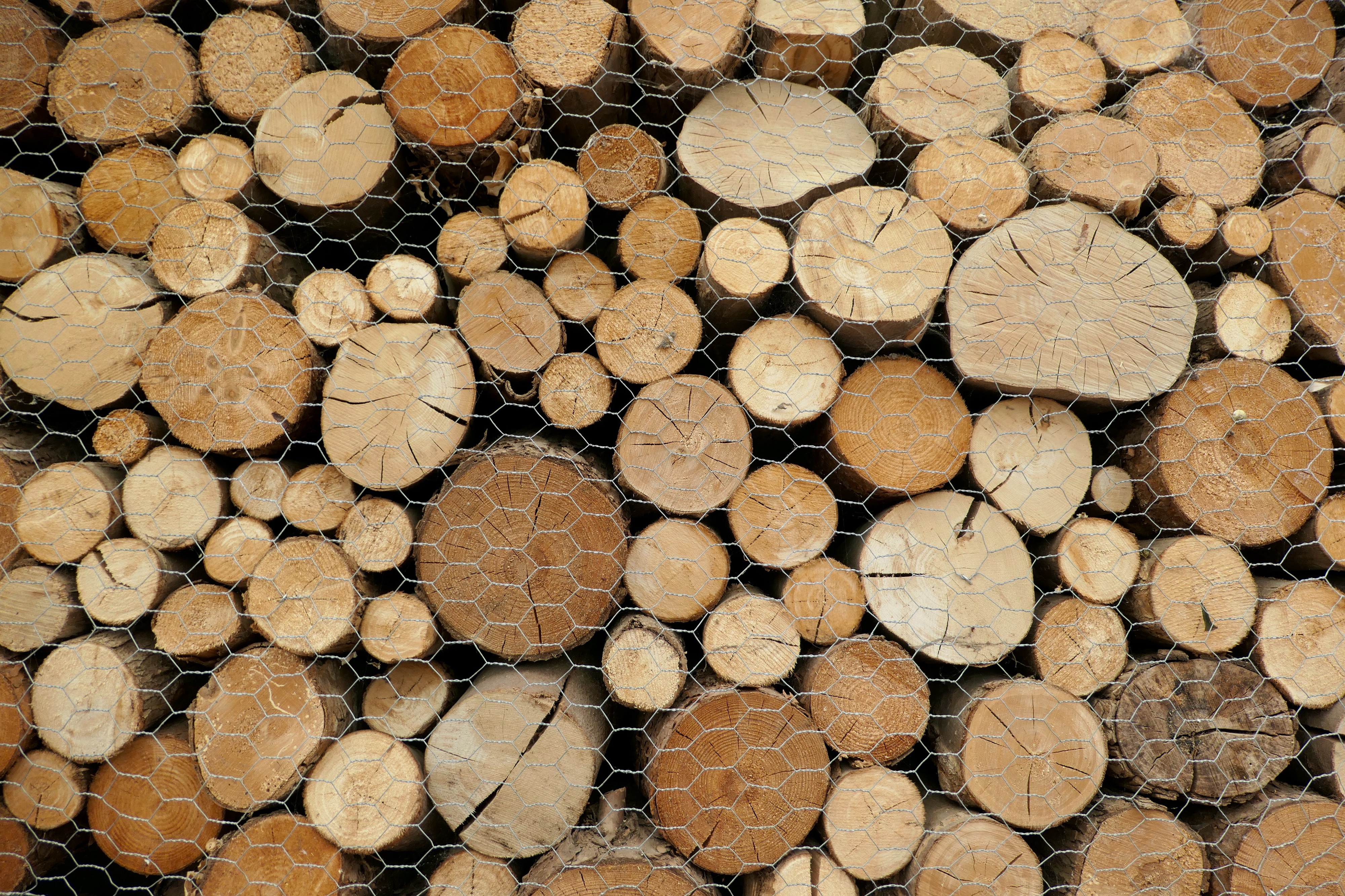 Photo of the end of a pile of cut trees in various round shapes and sizes behind chicken wire.