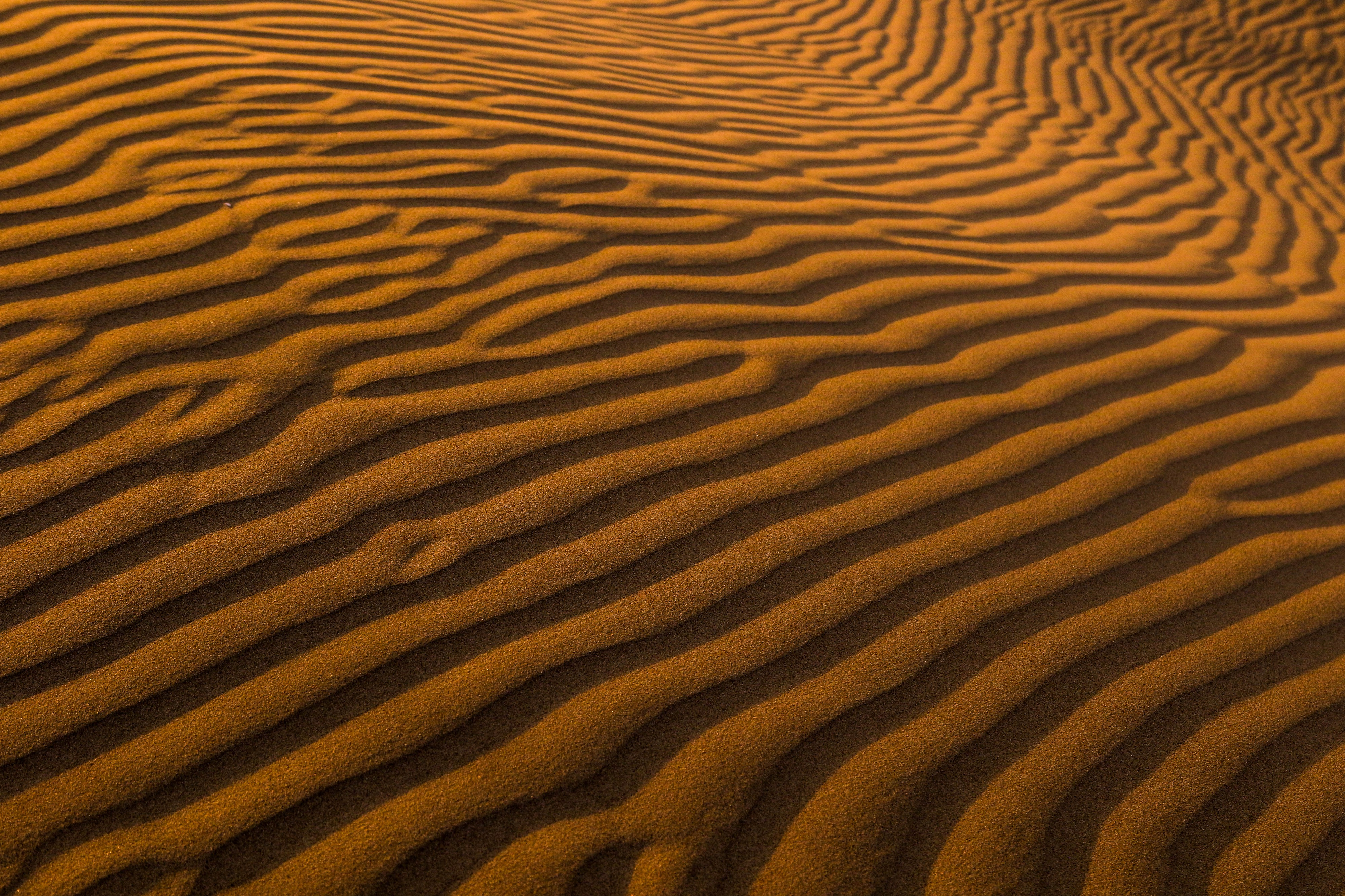 Image: the wind has made patterns in the sand in the desert