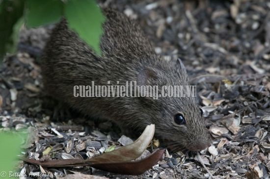 Tips for killing mice effectively with potatoes and ways to prevent