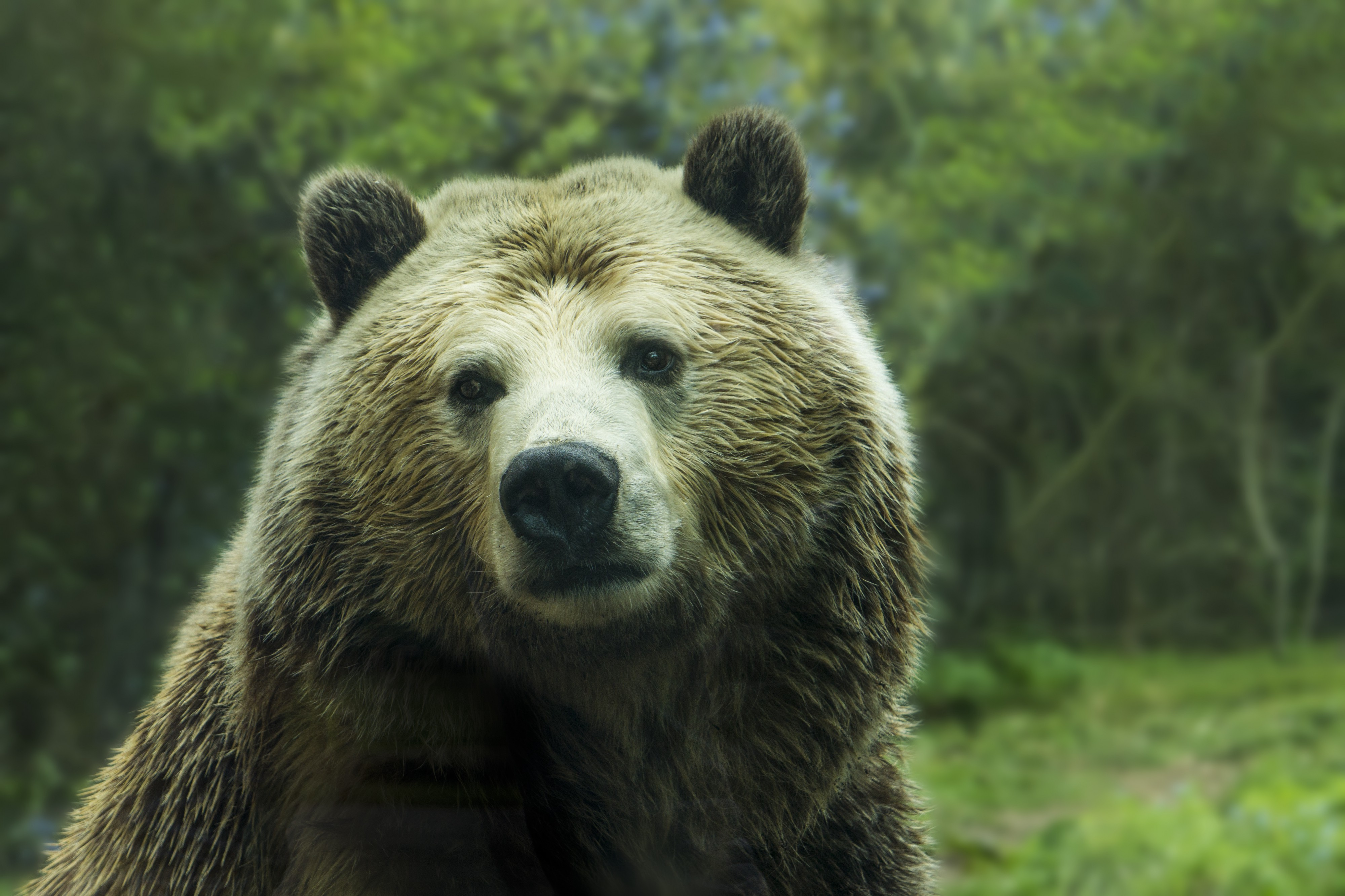 Conversations with A Canadian Bear: What Happens When You