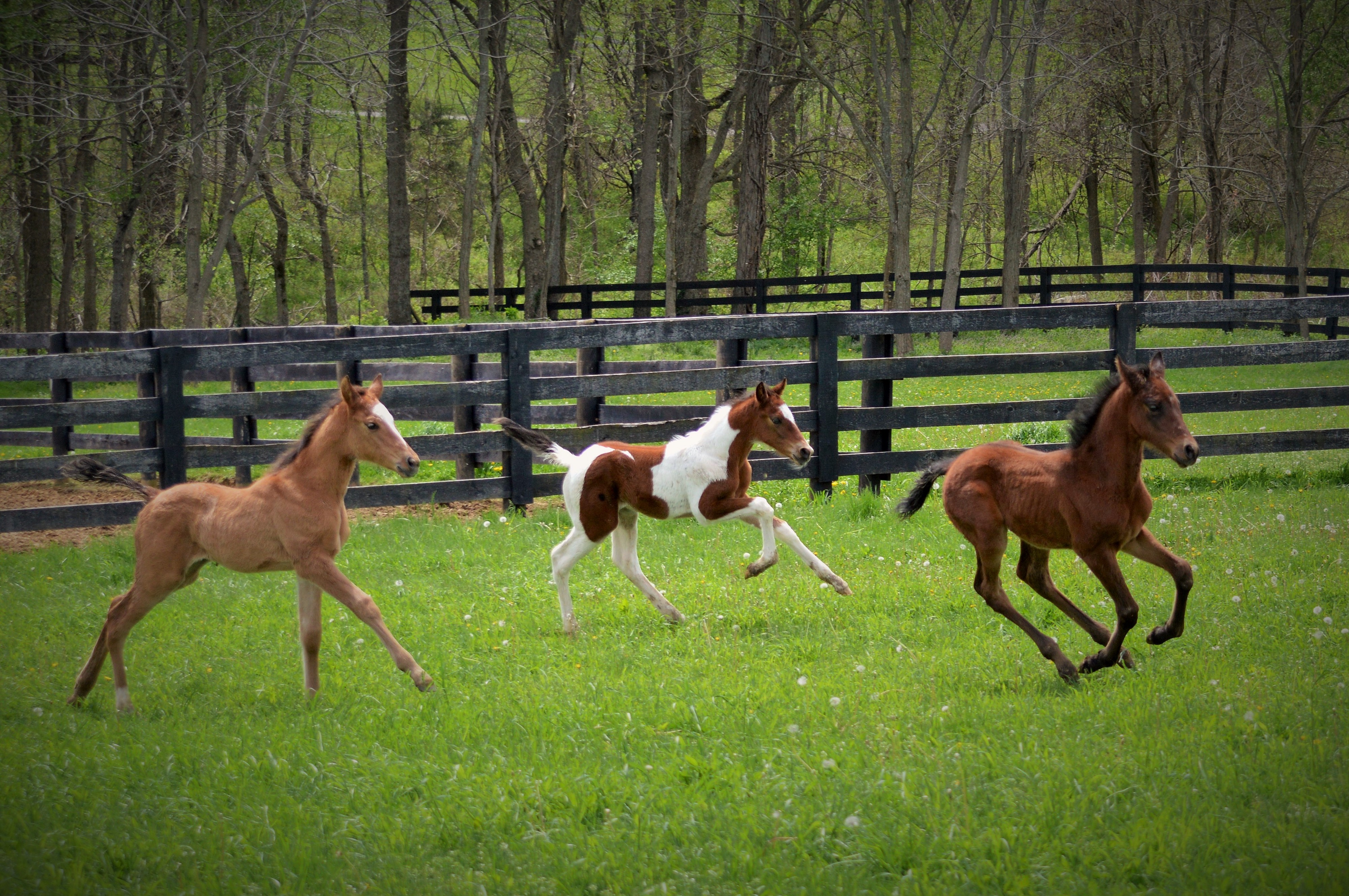 Nurse Foals: The Throwaway Horses - Ryan T  Bell - Medium