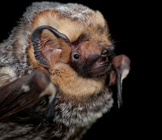 closeup of bat face