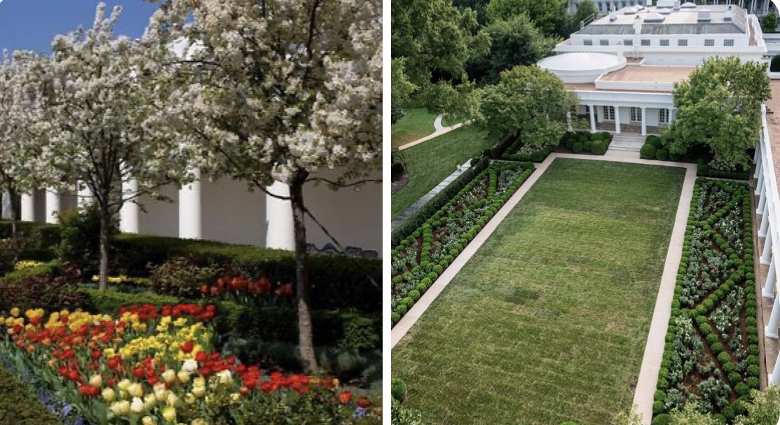 Melania Trump Should Be Arrested For Removing Trees From The White House Rose Garden Without A Permit By Charlotte Zobeir Ali La Bibliotheque Medium