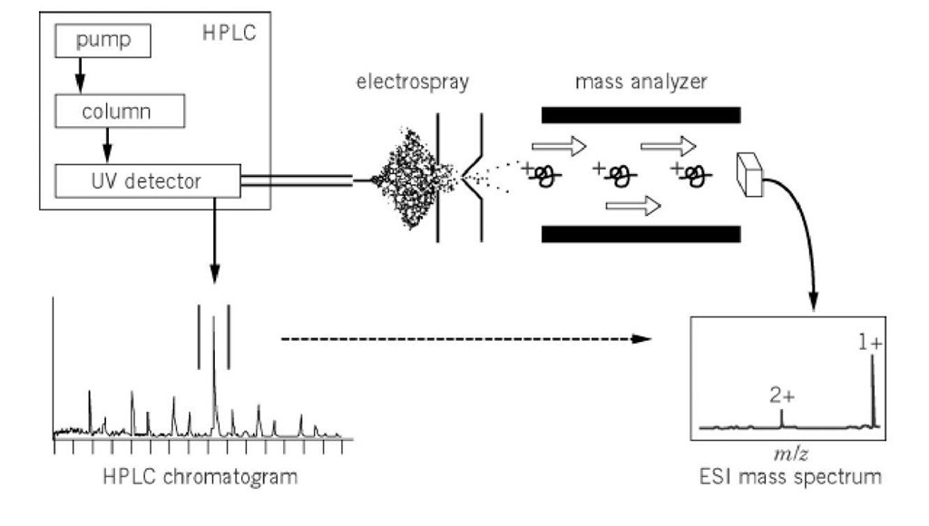 Liquid Chromatography and Mass Spectrometry — How It Works