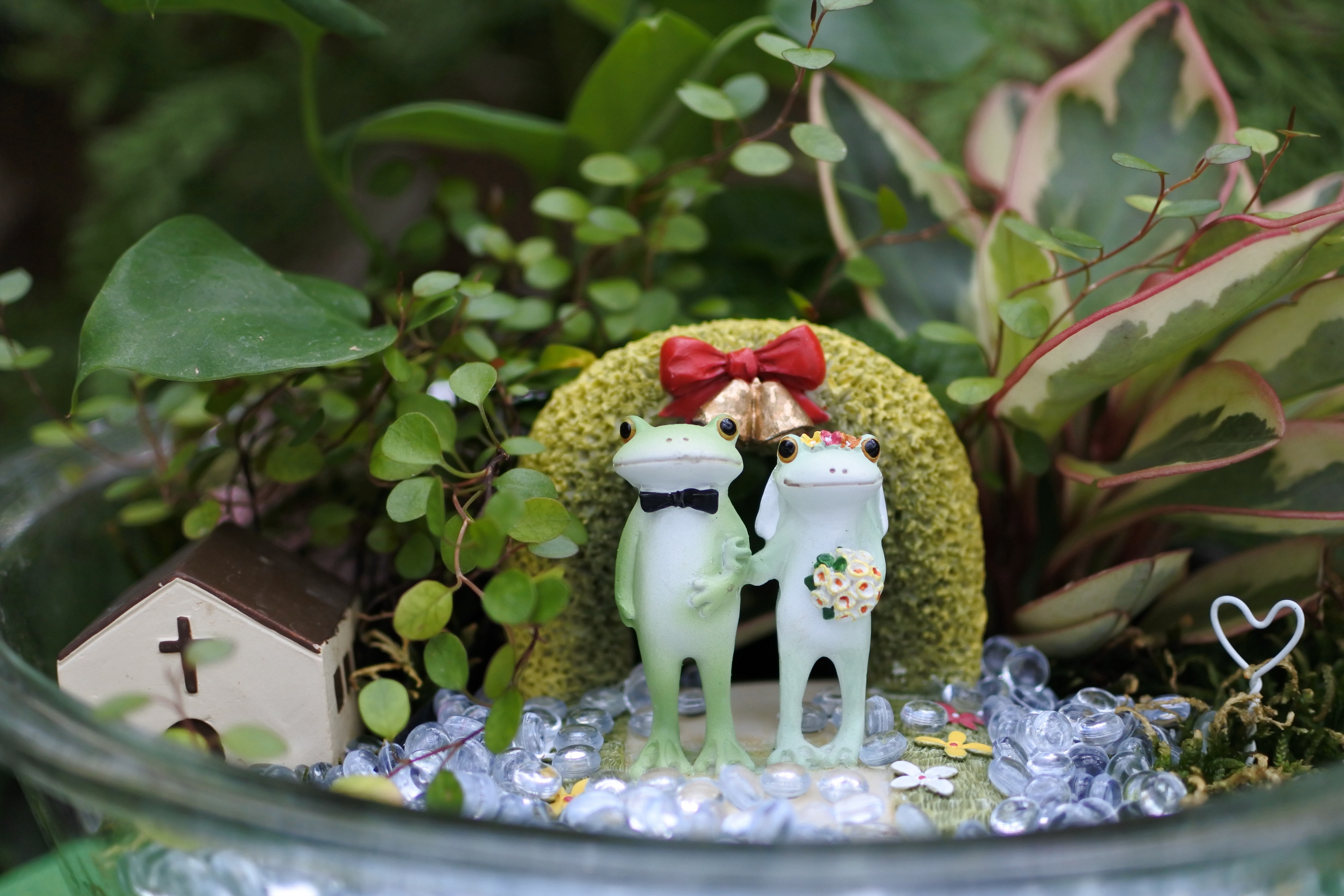Cute cermaic frog wedding in a little fairy garden with plants and a dollhouse church