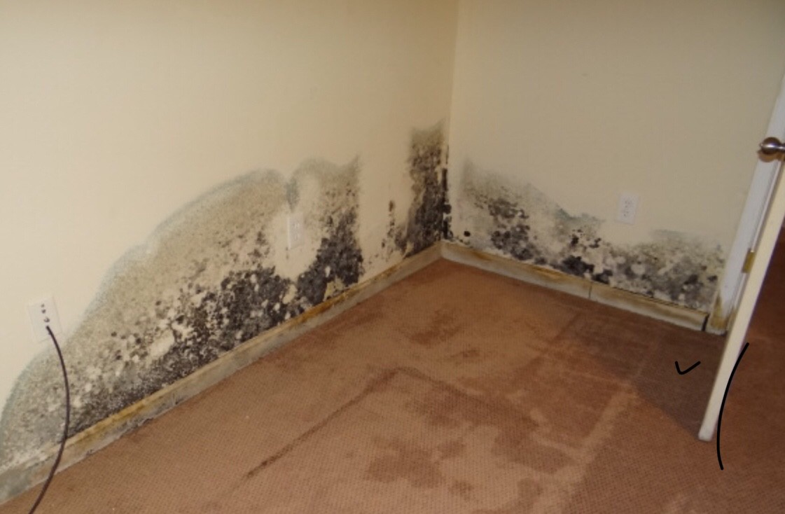 Unmasking The Truth About Mold - Treeusable 2018 - Medium