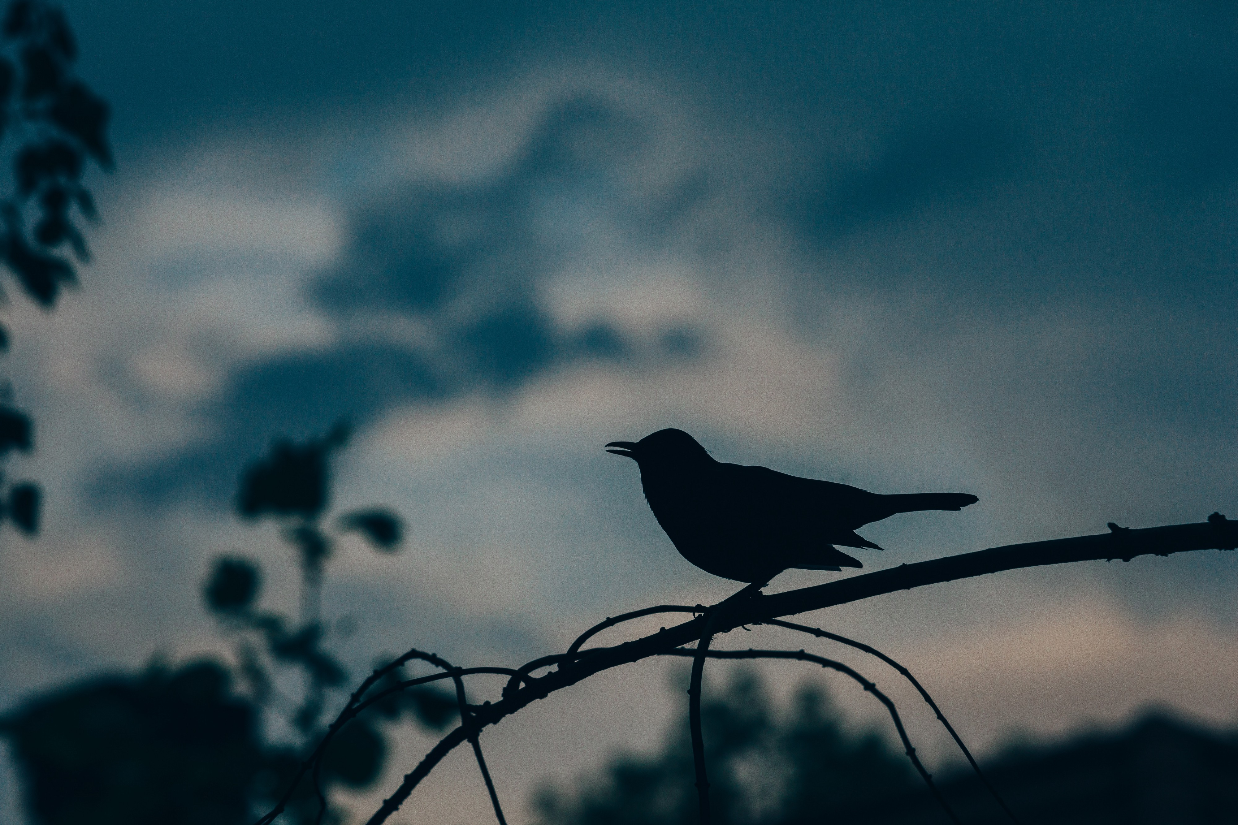 Blackbird Singing in the Dead of Night - Lit Up - Medium