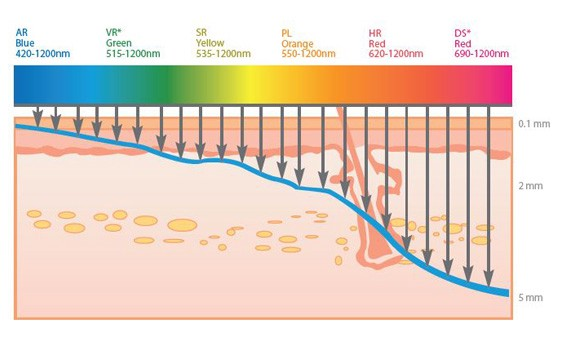 The tissue penetration of different wavelengths of light. We see a correlation between higher wavelength of light and higher