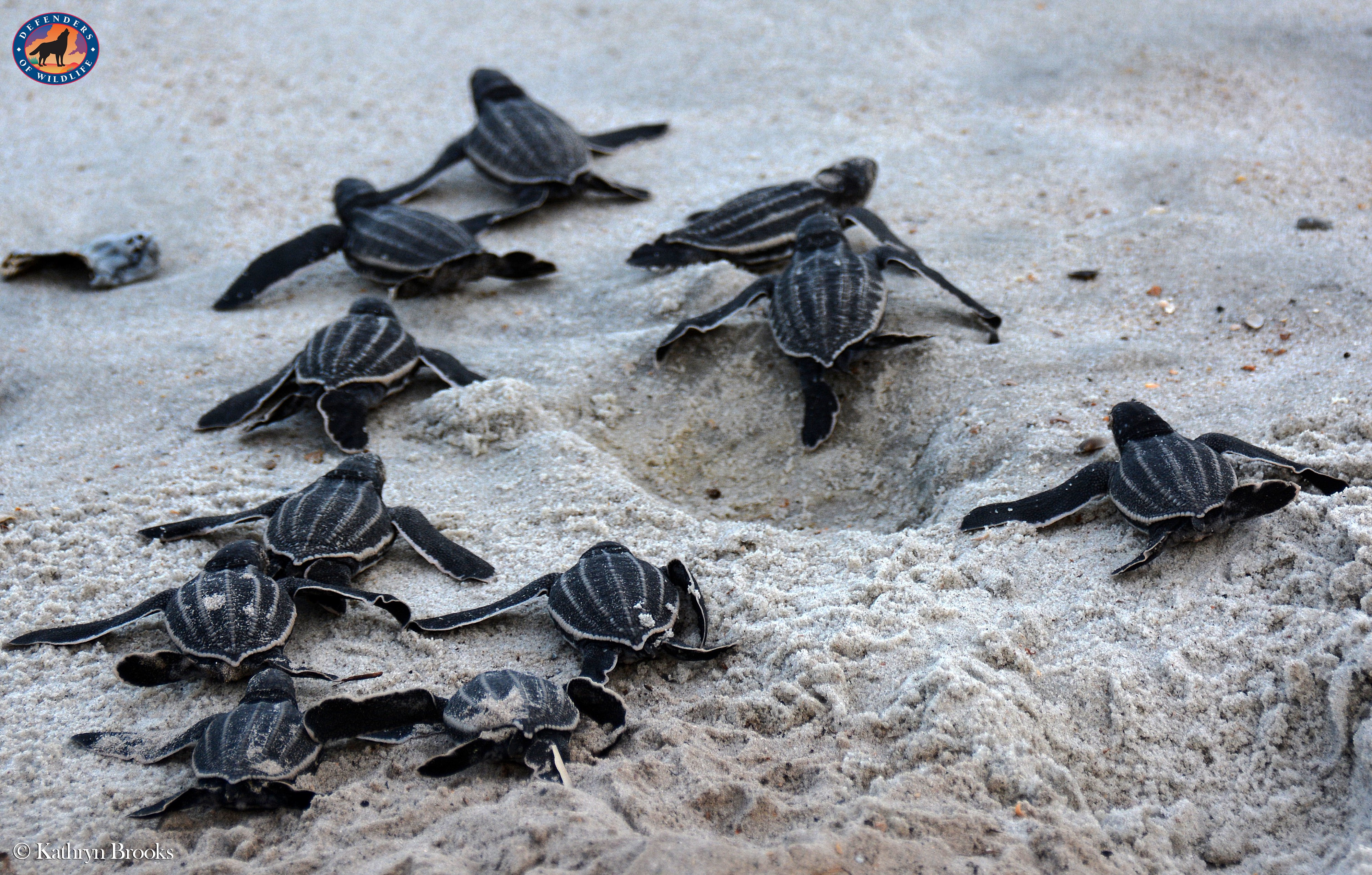 Coming Together to Protect Sea Turtles - Wild Without End