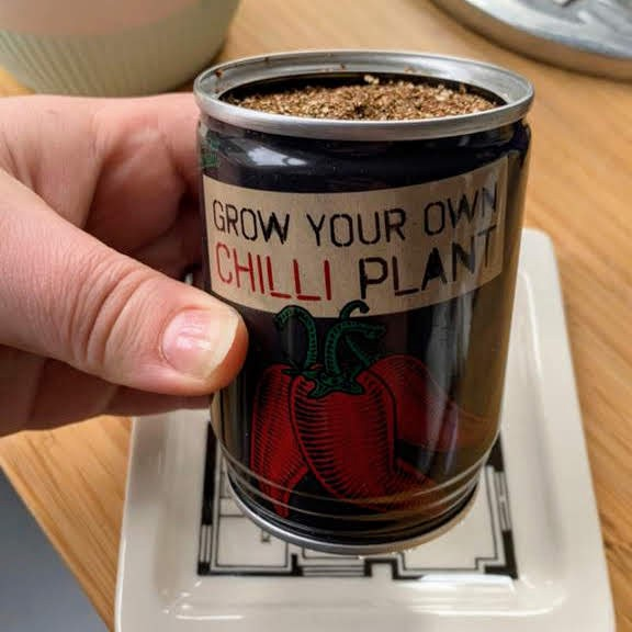Alex holding the grow your own chilli plant can