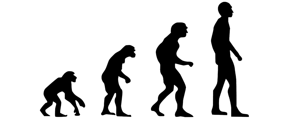 the braided estuary of human evolution insitome