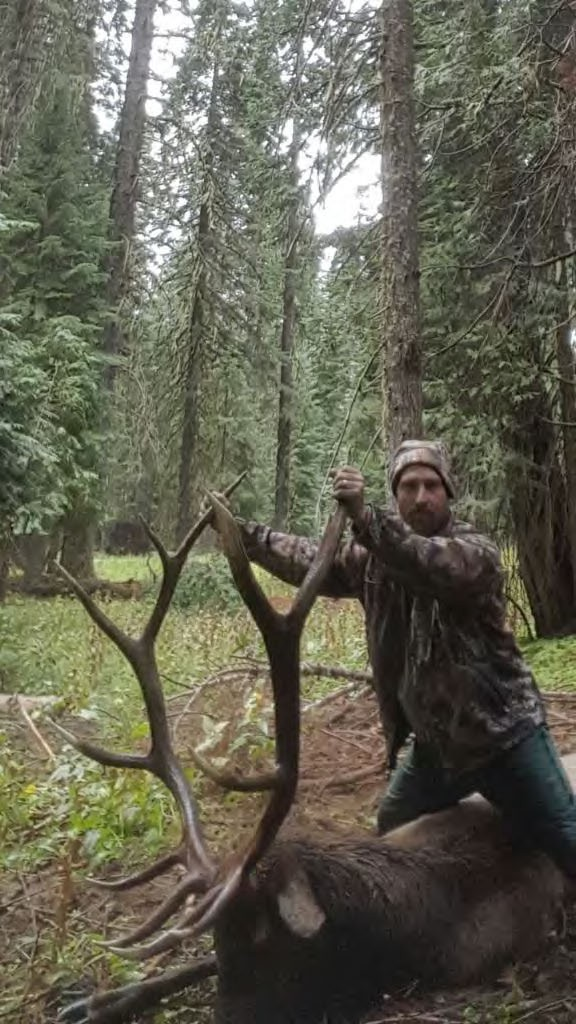 Adrian Wood pleaded guilty to a Lacey Act charge after he poached this bull elk from Crater Lake National Park on Sept. 22, 2016. Photo provided by Department of Justice.