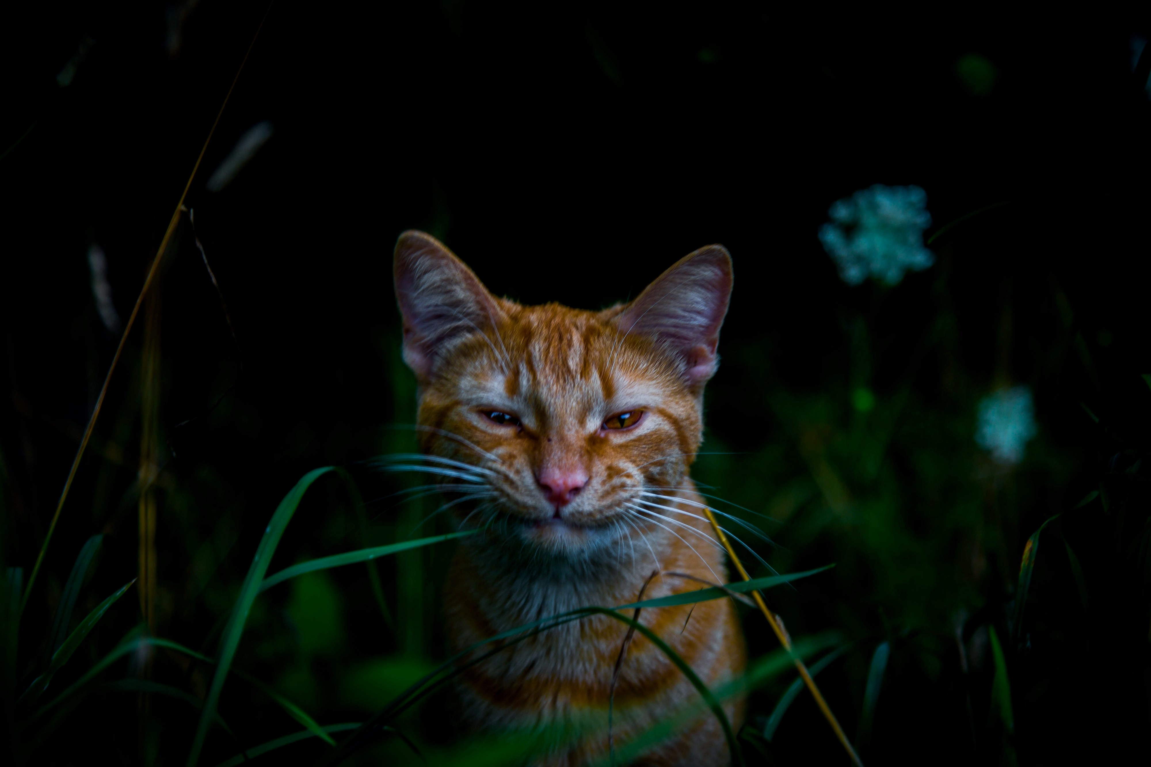Do Cats Hold Grudges Here S The Science Behind Whether These By Sam Westreich Phd Sharing Science Medium