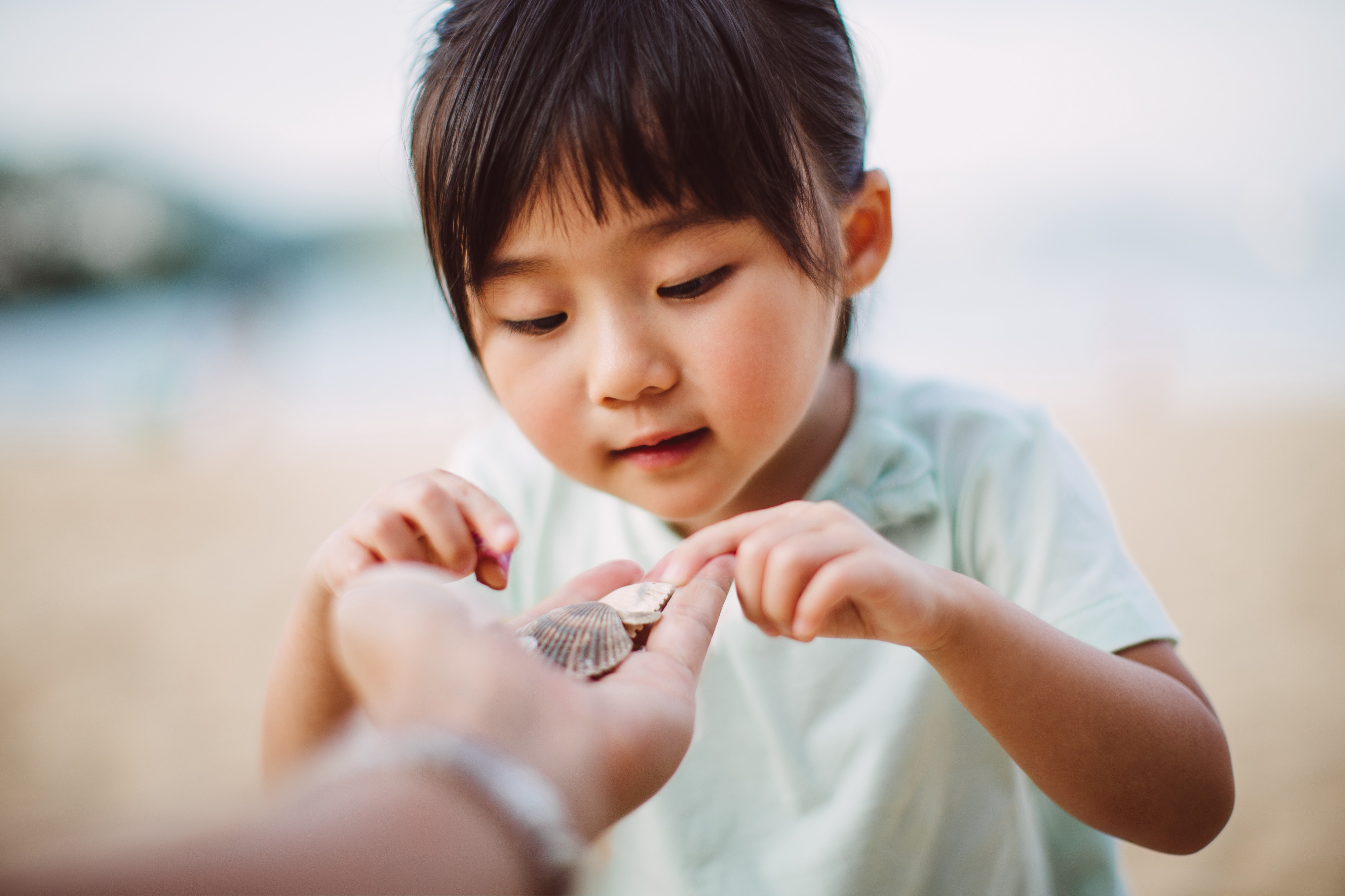 A  young girl chooses and picks a seashell from her father's hand.