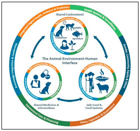 The Animal-Environment-Human interface of the One Health approach.