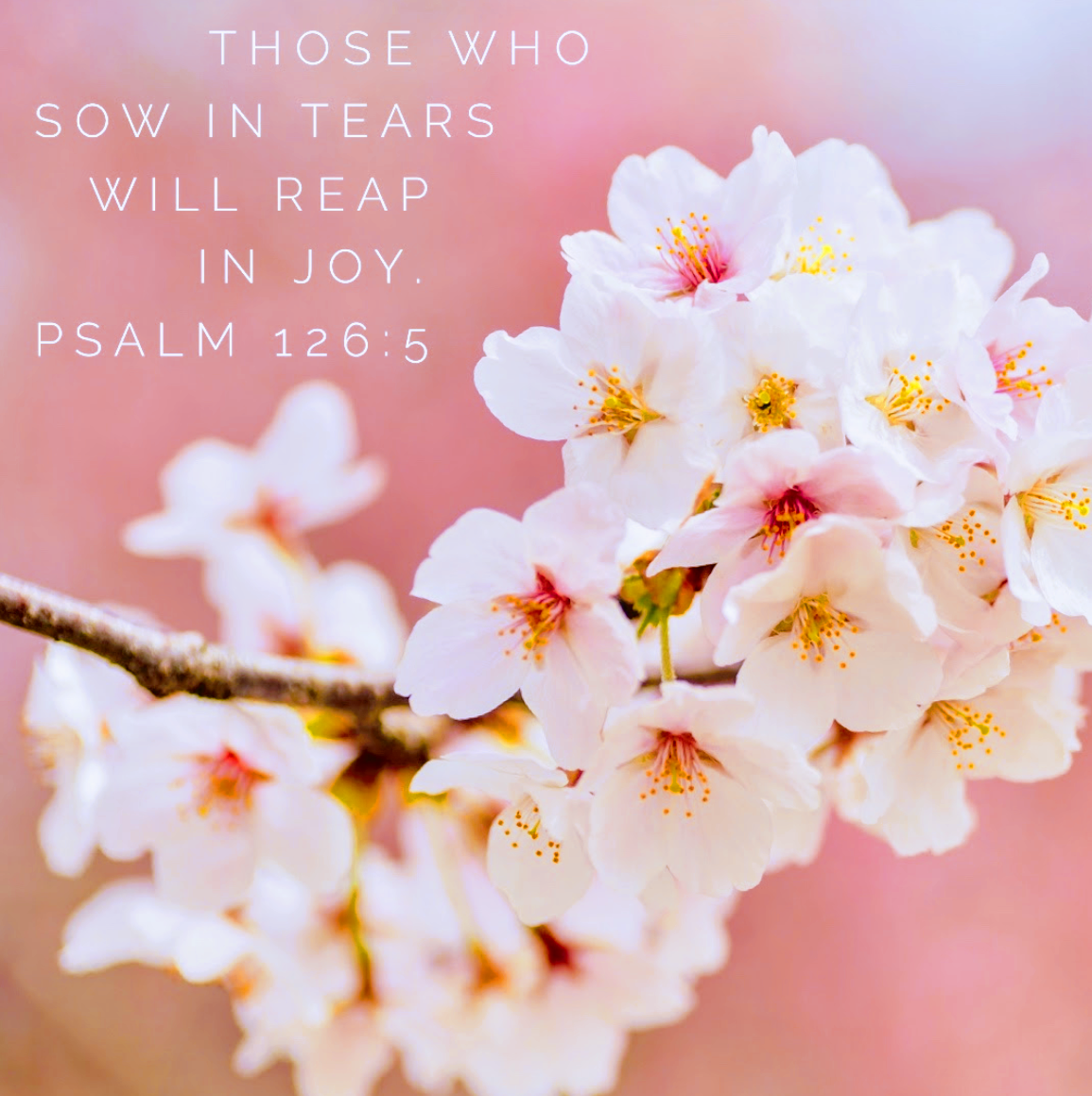 They that sow in tears shall reap in joy  - Psalm 126:5