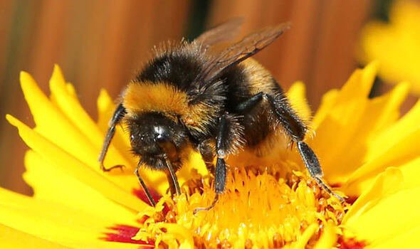 Bumblebees disappearing at rates 'consistent with mass extinction' as climate changes. University of Ottawa | February 6, 202