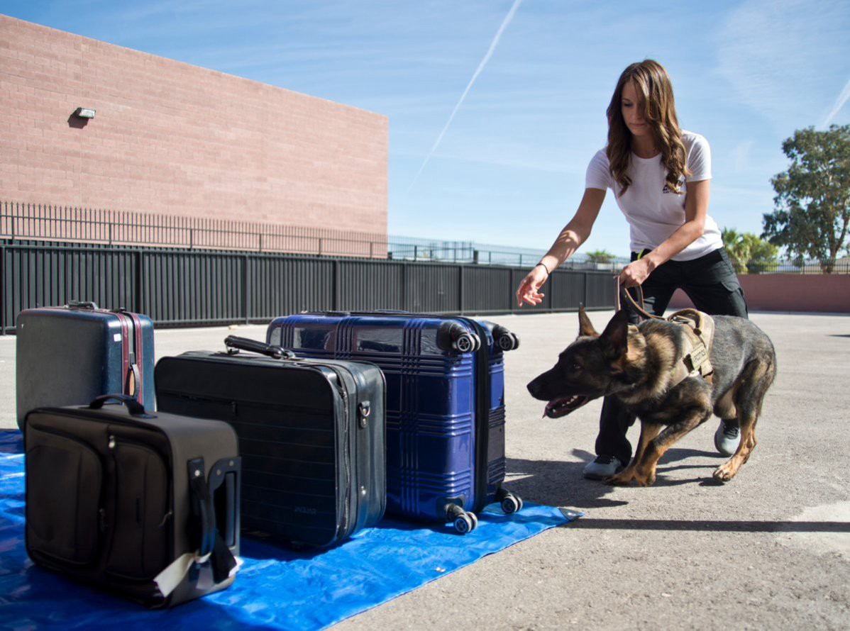 Las Vegas K9 Startup Offers Private Narcotic Detection Sweeps