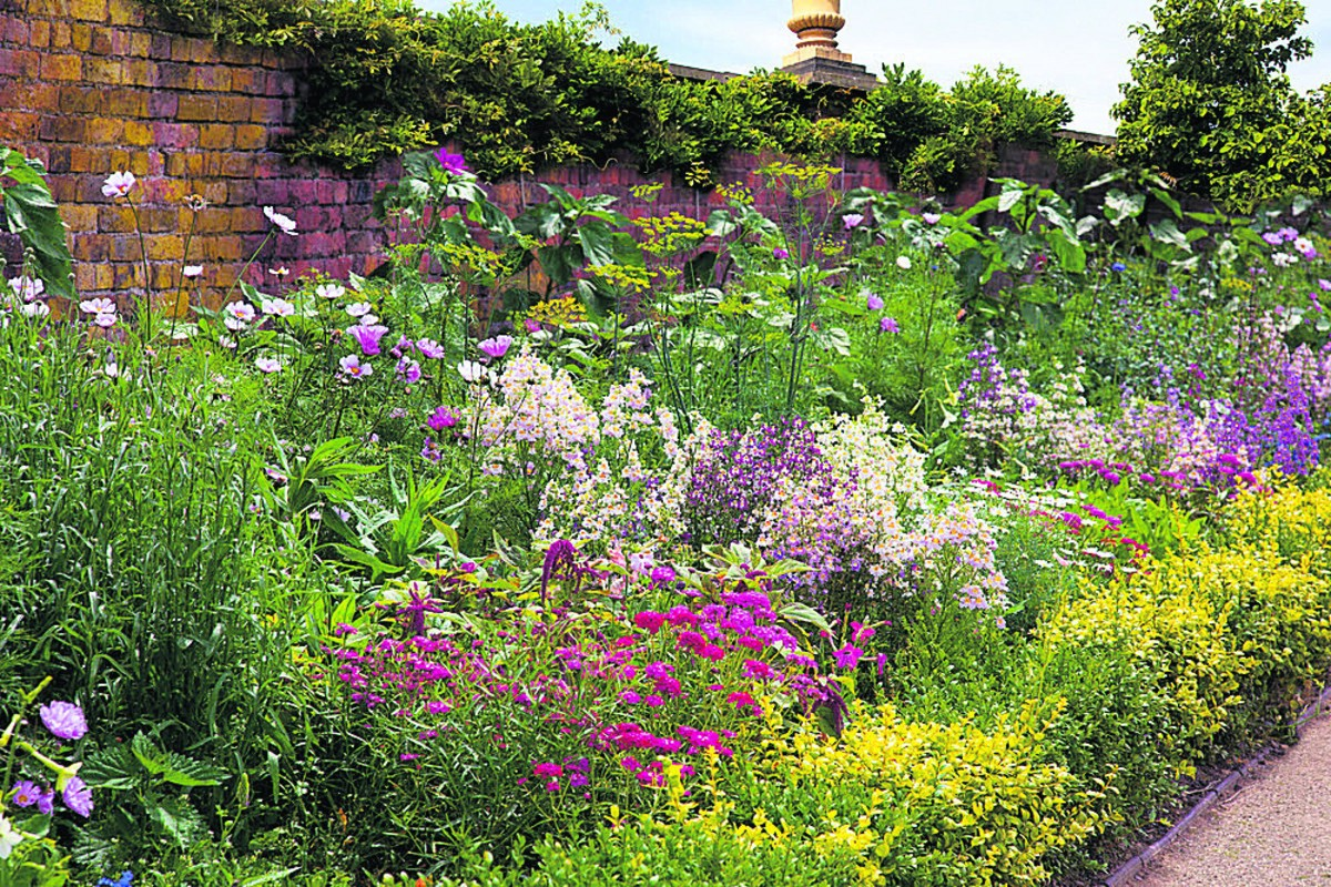 Why You Should Create A Bird Border In Your Garden To Help Your