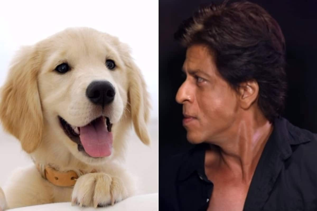 Amir khan's dog name Shahrukh. The feud between Aamir Khan and Shah… | by  India's Story | Medium