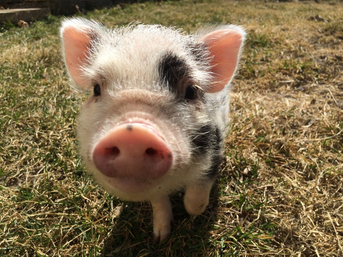 Interview with Apache Pig: Theory and Practical Guide