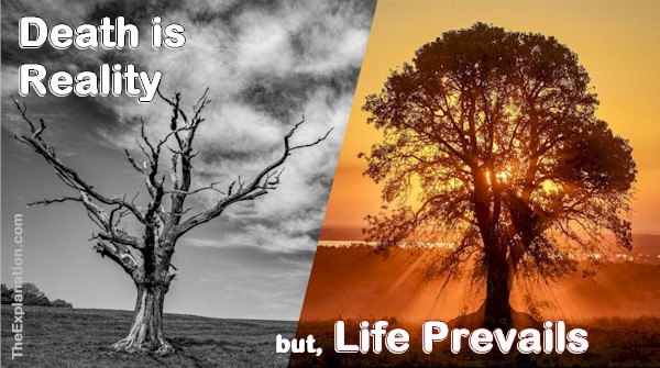 Death is a reality, but Life prevails in God's plan.