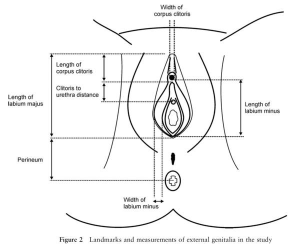 male sex reproductive system in North Vancouver