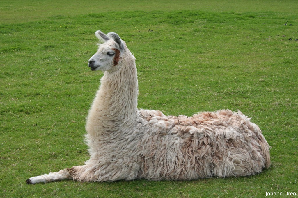 Save the Drama — For Project LLAMA - Life360 Engineering