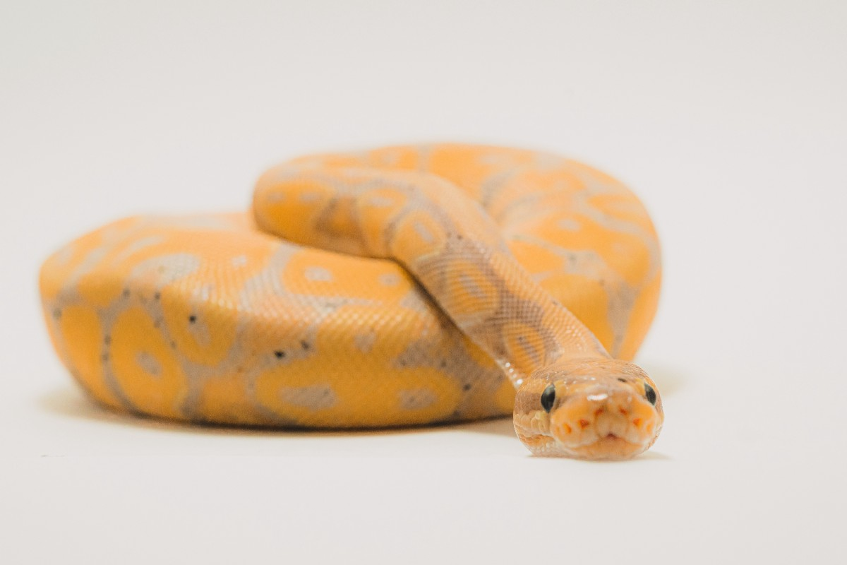 20 tips to learn Python from zero. Practical tips to approach your ...